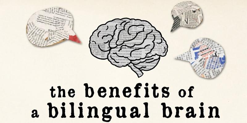 معرفی مزایای یک مغز دو زبانه